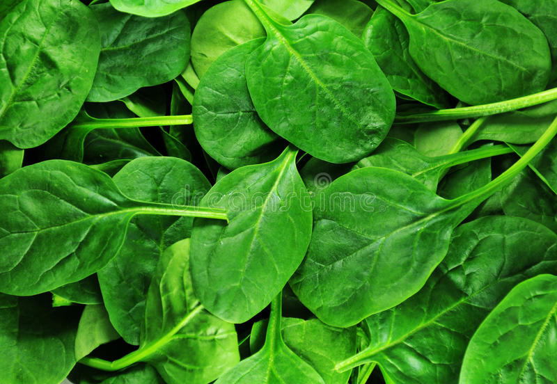 Spinach stock image