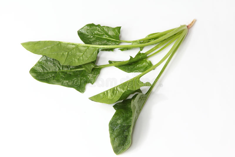 Download Spinach stock photo. Image of green, leafy, background - 22499108