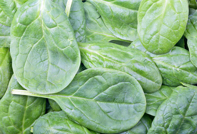 Spinach green leaves background. Close-up stock images