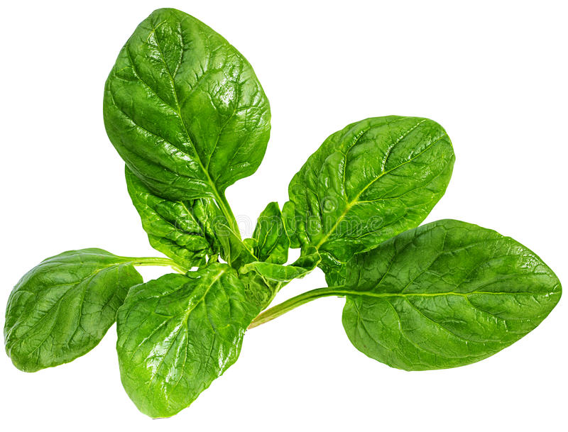 Spinach Isolated on a white stock photos