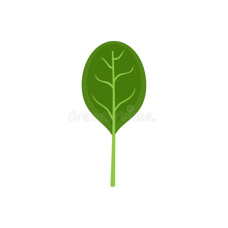 Spinach leave with shadow icon, flat style. Spinach leave with shadow icon. Flat illustration of spinach leave with shadow icon for web isolated on white stock illustration