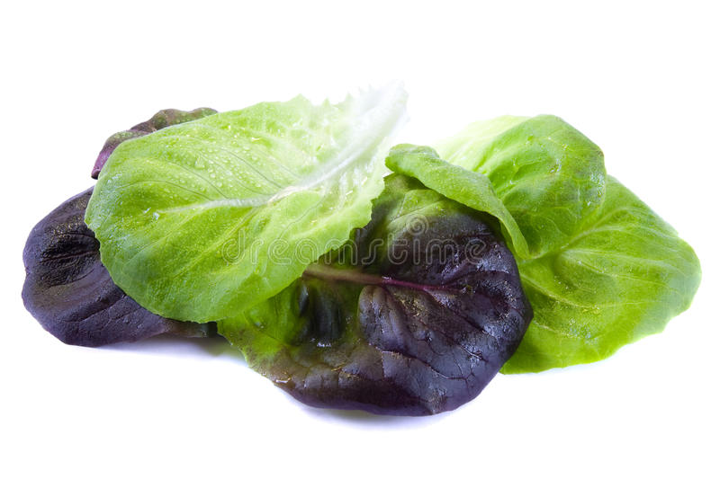 Download Spinach Leaves Stock Image - Image: 14907571