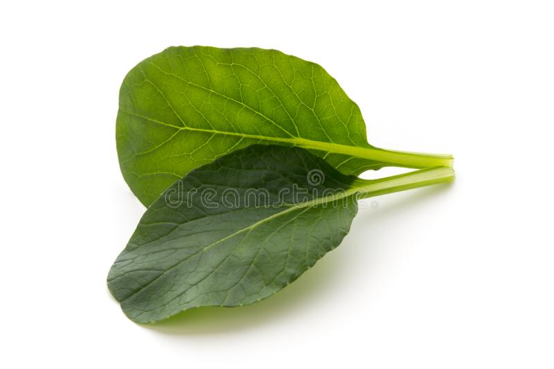 Spinach leaves close up isolated on white. royalty free stock photos