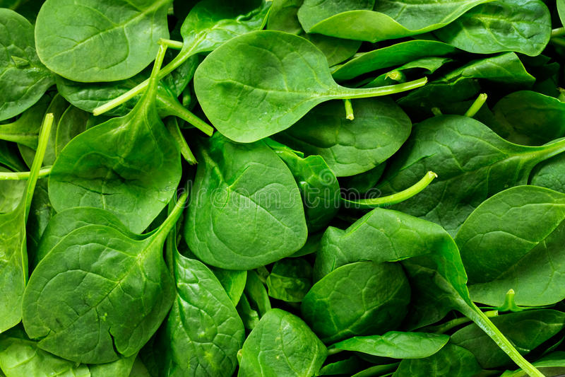 Spinach. Pile of fresh spinach leaves