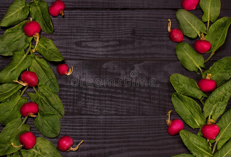 Spinach and radishes royalty free stock images
