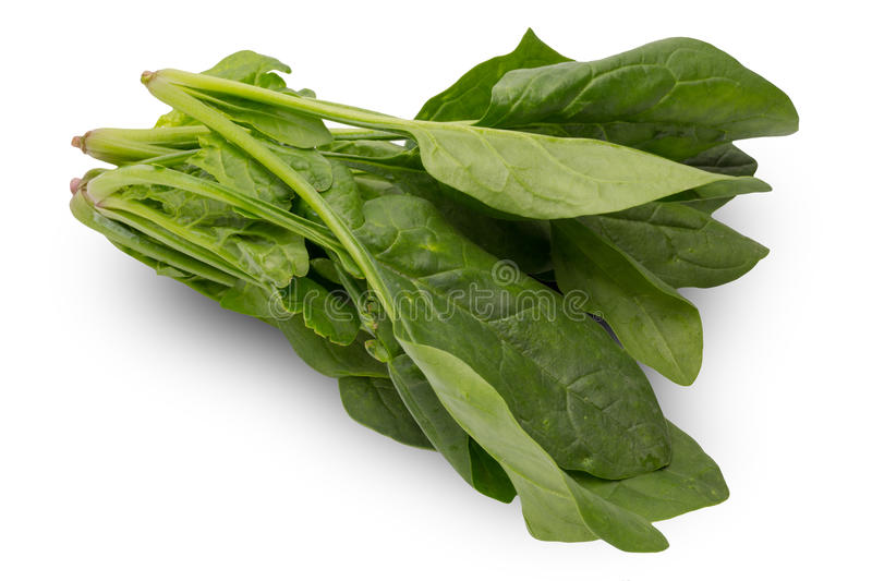 Spinach in a white background stock images