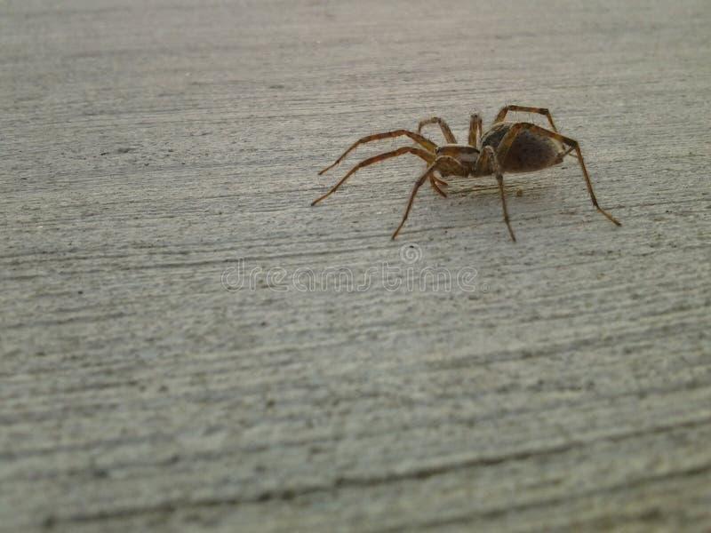 spinachtige stock afbeelding