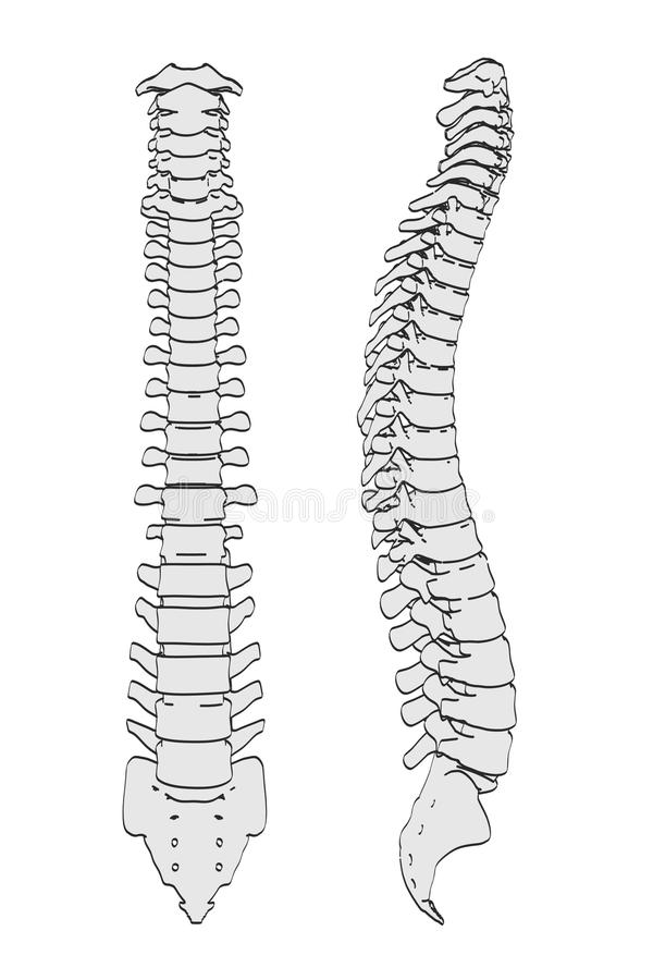This is a picture of Challenger Spinal Cord Drawing