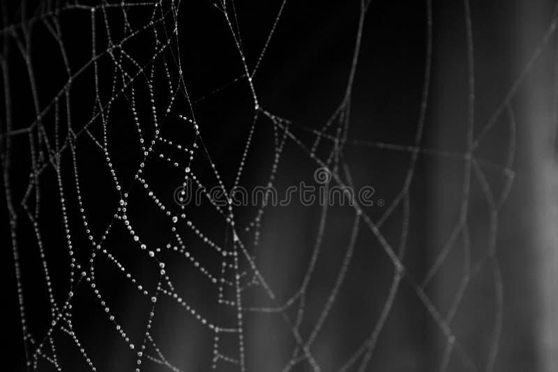 Spindel Gratis Arkivbild