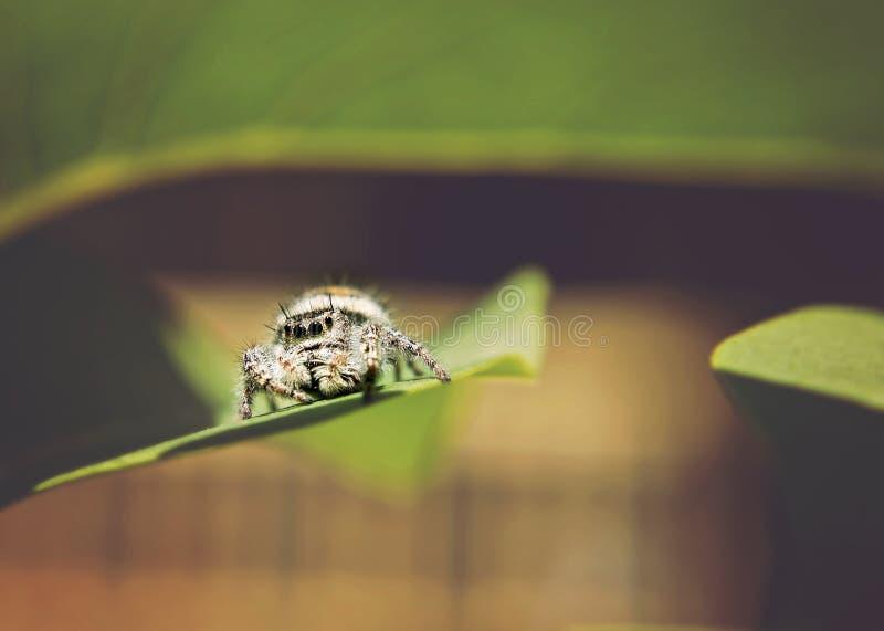 Spindel arkivfoton