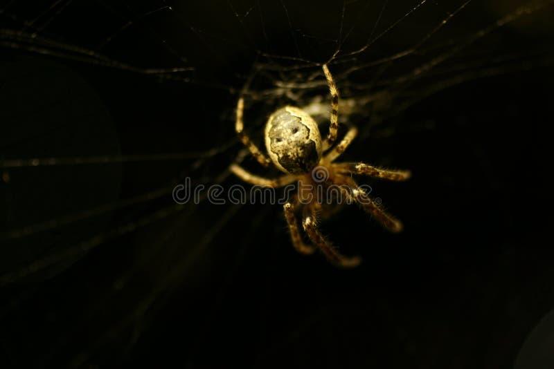 Download Spindel arkivfoto. Bild av naturligt, spindel, makro, green - 980482