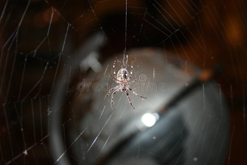 Spindel framme av en spindelnät royaltyfri bild