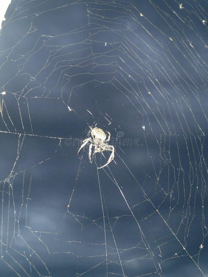Spindel i himlen royaltyfri fotografi