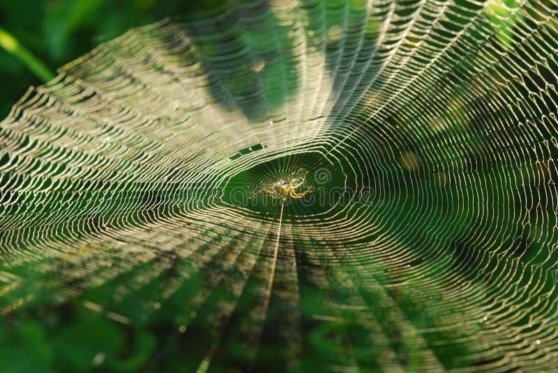 Spindel i mitt av rengöringsduken arkivbilder