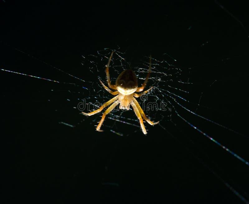 Download Spindel i natur marco arkivfoto. Bild av leaf, fauna - 106834836