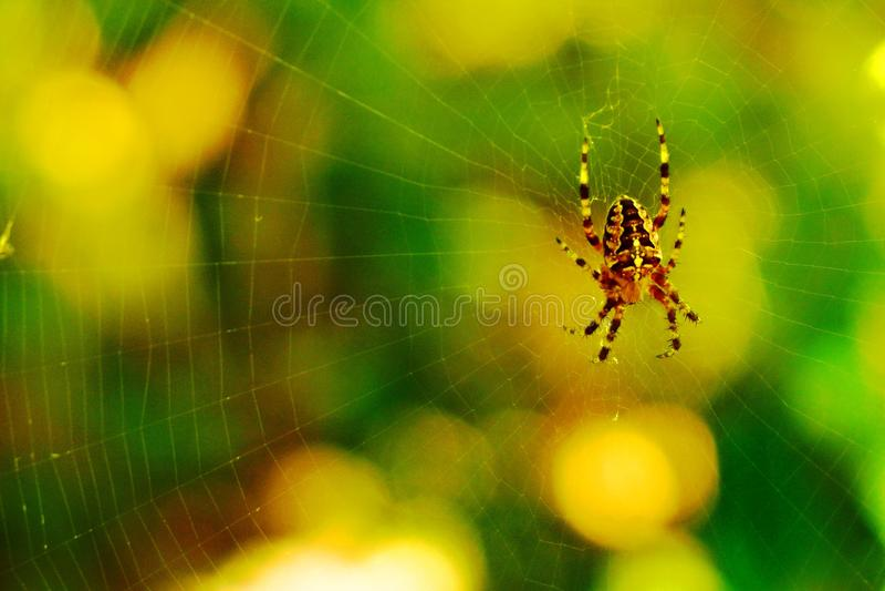 Spindel i skogen royaltyfri fotografi