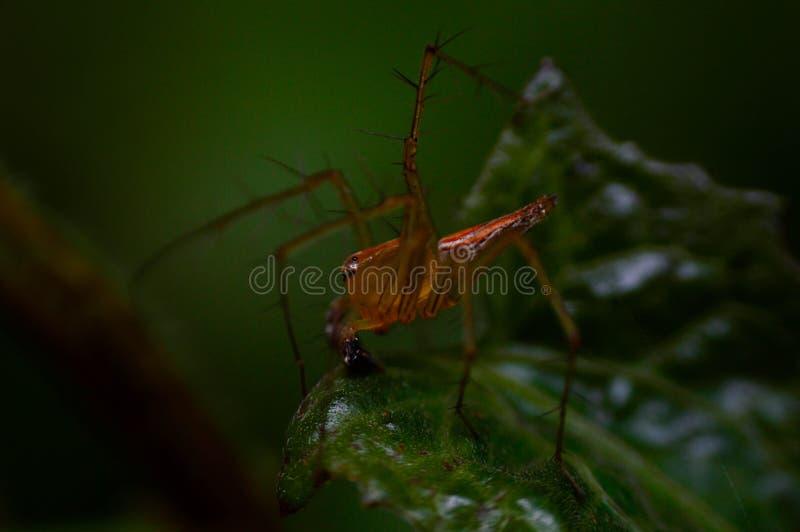 Spindel i växtmakro arkivfoto