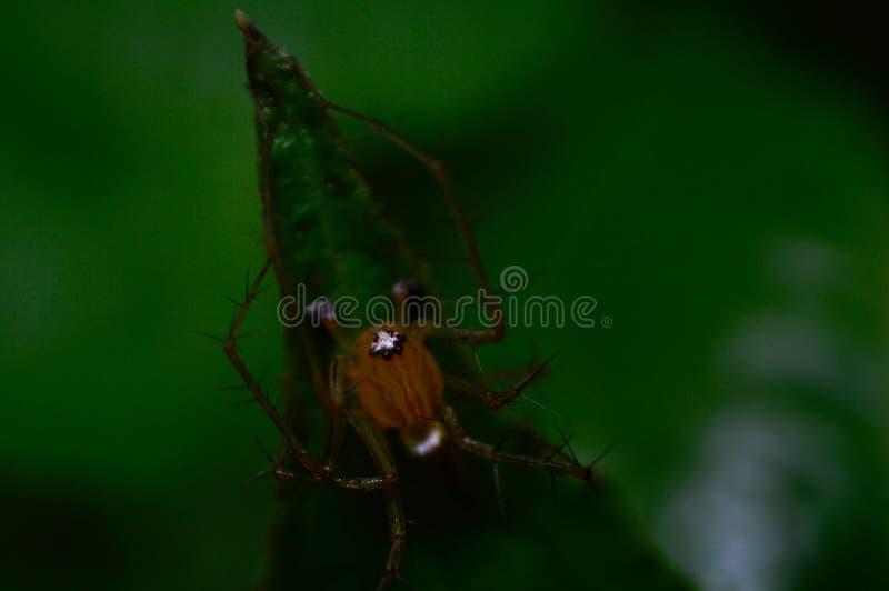 Spindel i växtmakro arkivfoton