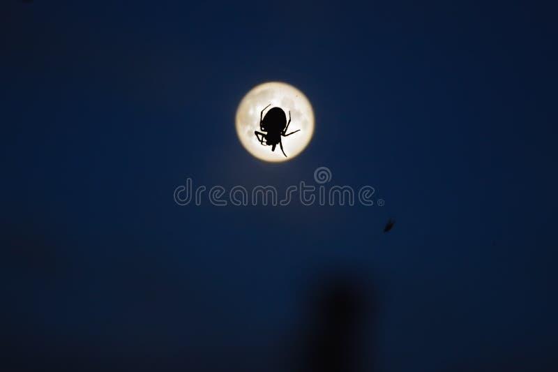 Spindel och måne fotografering för bildbyråer