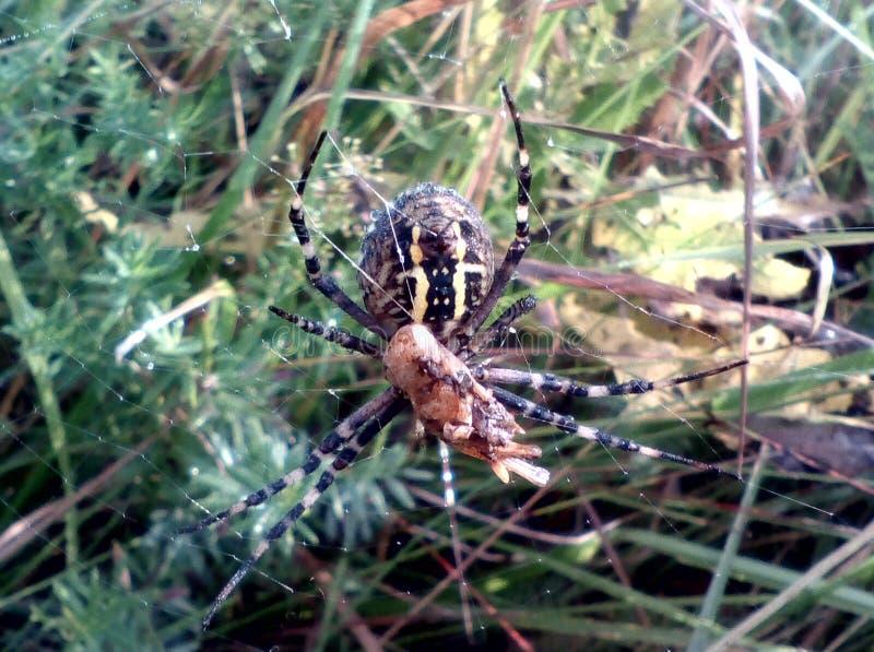 Spindel och spindelrengöringsduk fotografering för bildbyråer