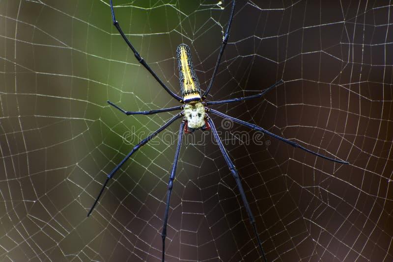 Spindel på cobweb arkivfoton