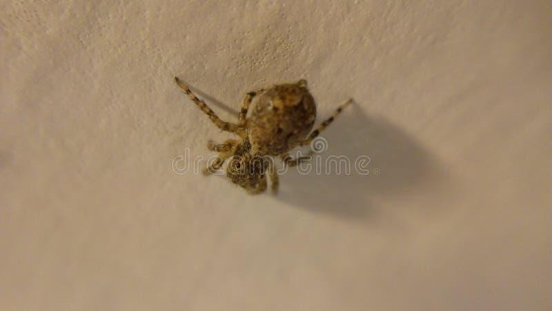 Spindel på golvet arkivfoton