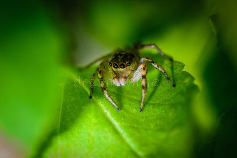 Spindel på leafen arkivfoton