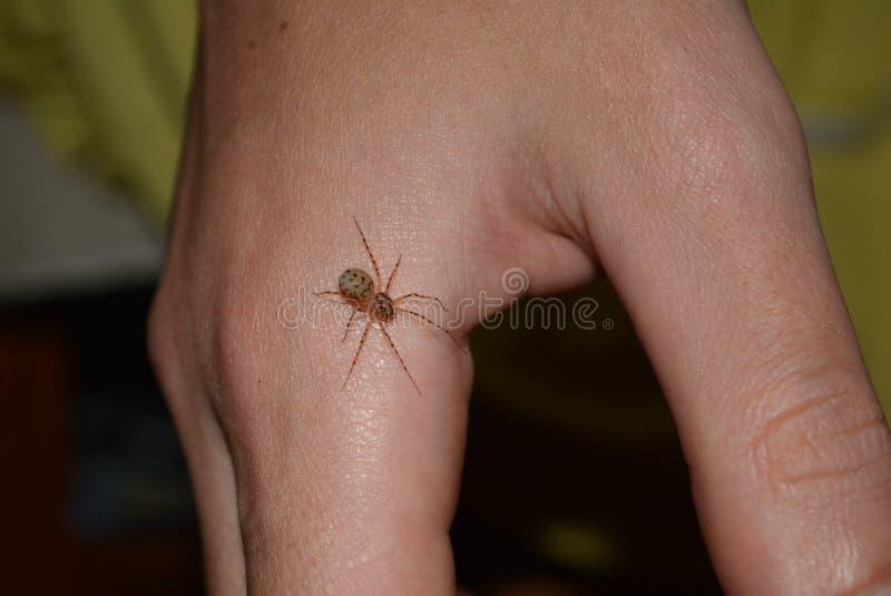 Spindel på räcka arkivbilder