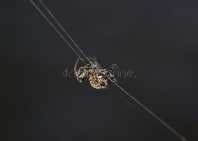 Spindel på rengöringsduken royaltyfri bild