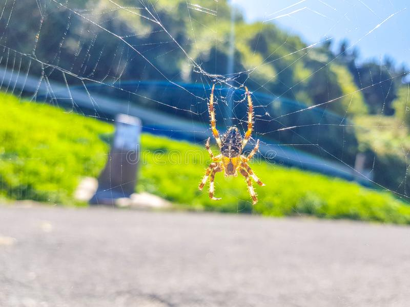 Spider Solitär Bild