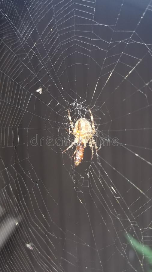 Spindel rengöringsduk i regn arkivbild