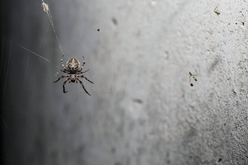 Spindel som kryper i mörkret royaltyfri foto
