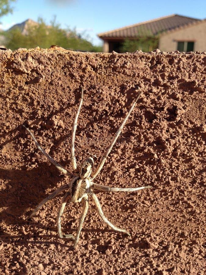 Spindel som så är stor som ett hus! arkivbilder