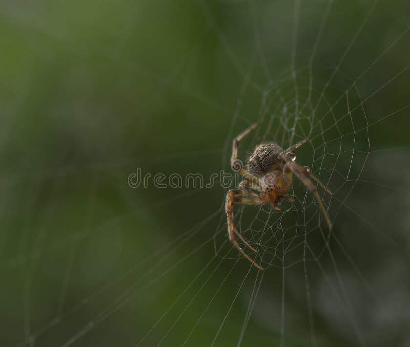 Spindel som ställer in tabellen för det nästa målet royaltyfri foto