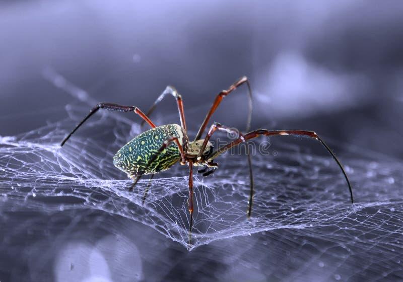 Spindel som ut ser för deras rov arkivbilder