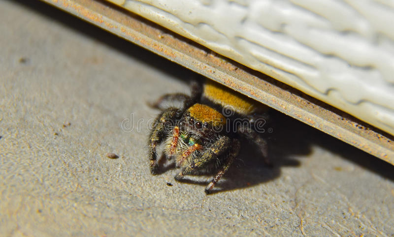 Spindel upp nära och personligt arkivfoton