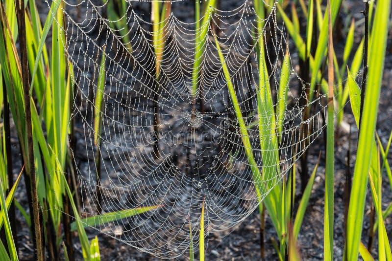 Spindelnät arkivfoton