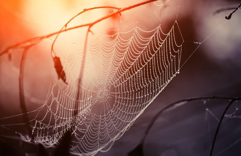 Spindelnät i daggdroppar fotografering för bildbyråer
