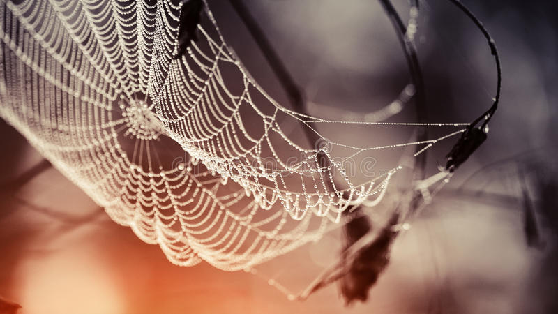Spindelnät i daggdroppar royaltyfri bild