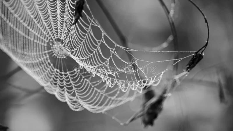 Spindelnät i daggdroppar arkivfoton