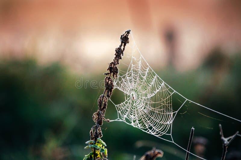 Spindelnät i frost på morgonen Is på spindels rengöringsduk arkivfoton