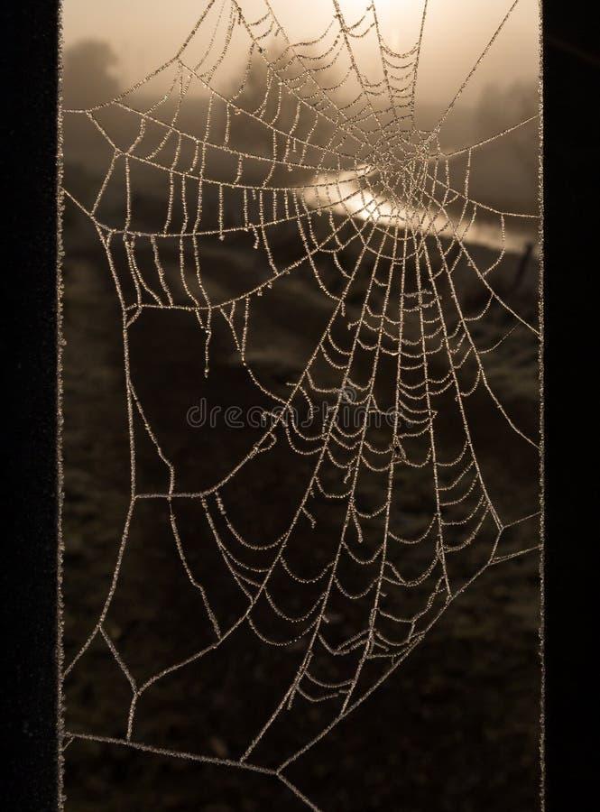 Spindelnät i frosten royaltyfria foton
