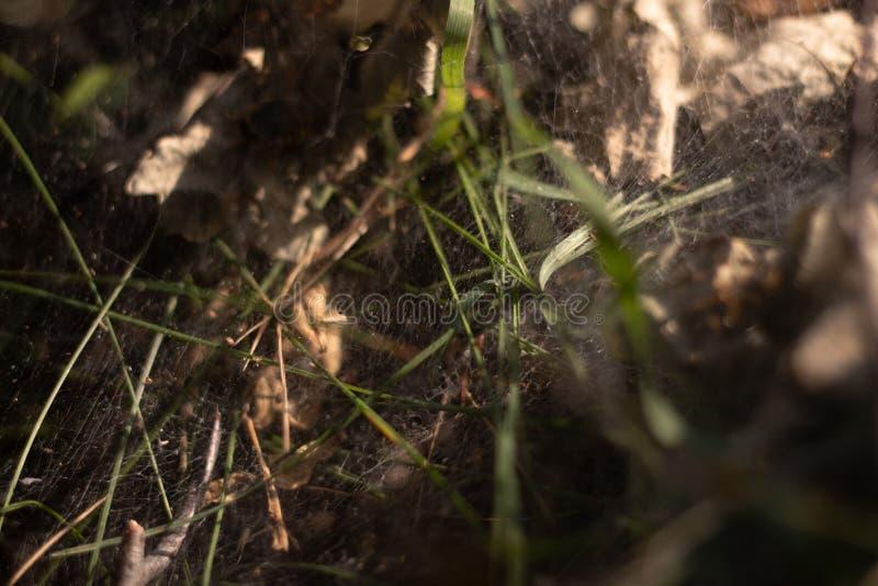 Spindelnät, i träna och att falla en stråle av solsken royaltyfri foto