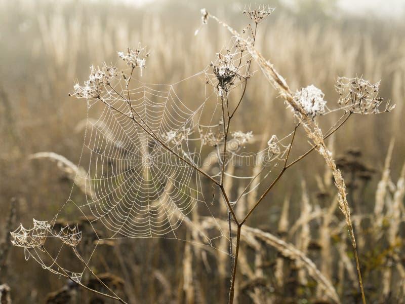 Spindelnät med daggdroppar i morgondimma på gryning på suddig bakgrundsnärbildsikt arkivfoton