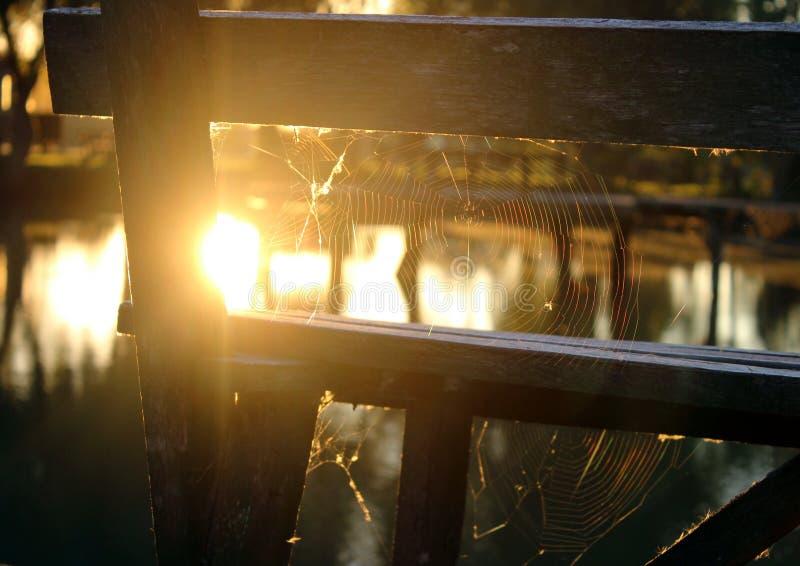 Spindelnät och reflexionssoluppgång i sjön arkivbilder