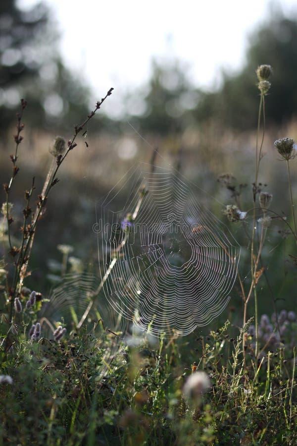 Spindelnät på hösten arkivbilder