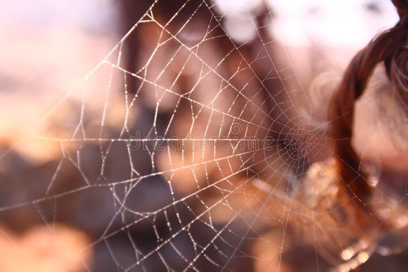 Spindelnät spiderweb arkivfoto