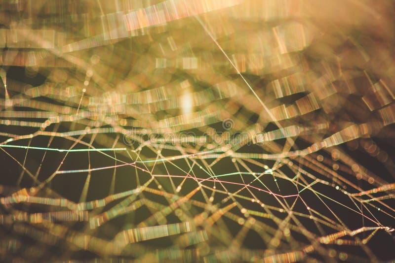 Spindelnätmakroabstrakt begrepp arkivfoto