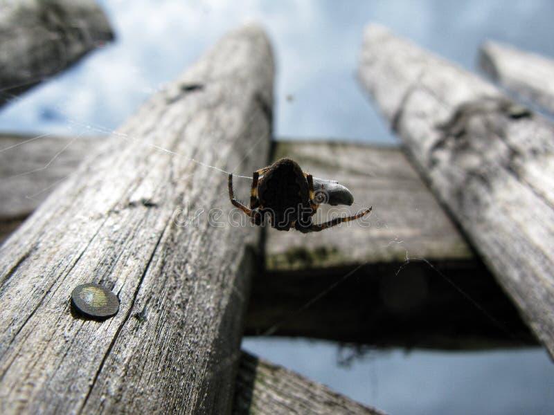 Spindeln äter rovet fotografering för bildbyråer