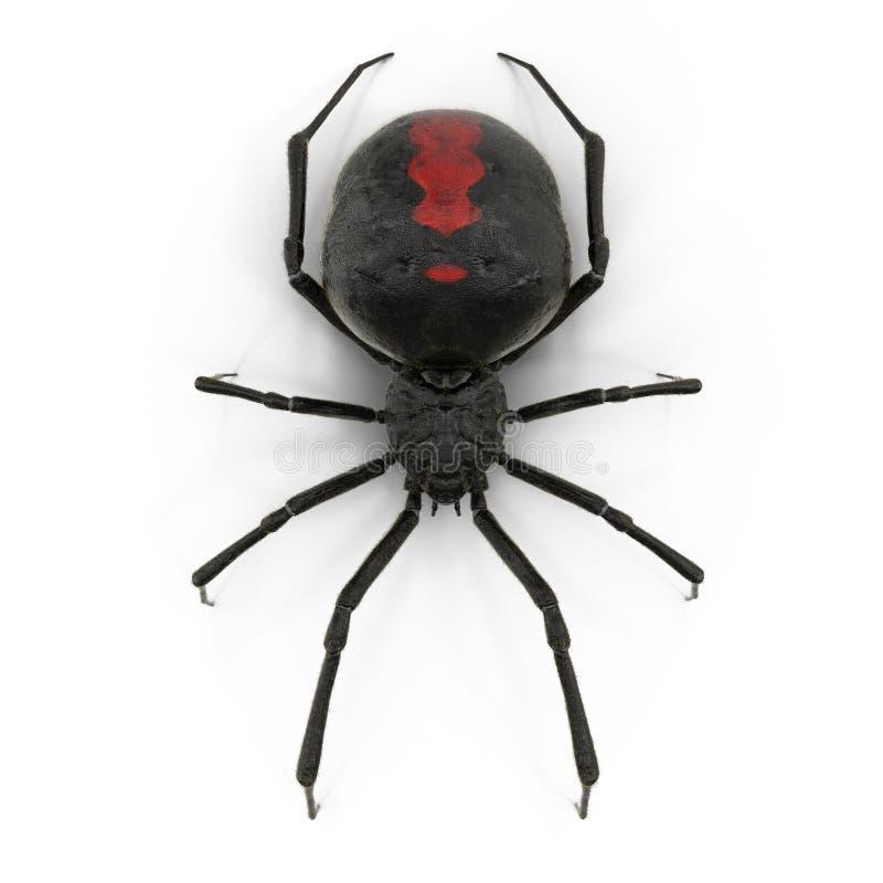 Spindeln för den svarta änkan isolerade illustrationen 3D på vit bakgrund vektor illustrationer